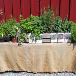 Malins kryddväxter