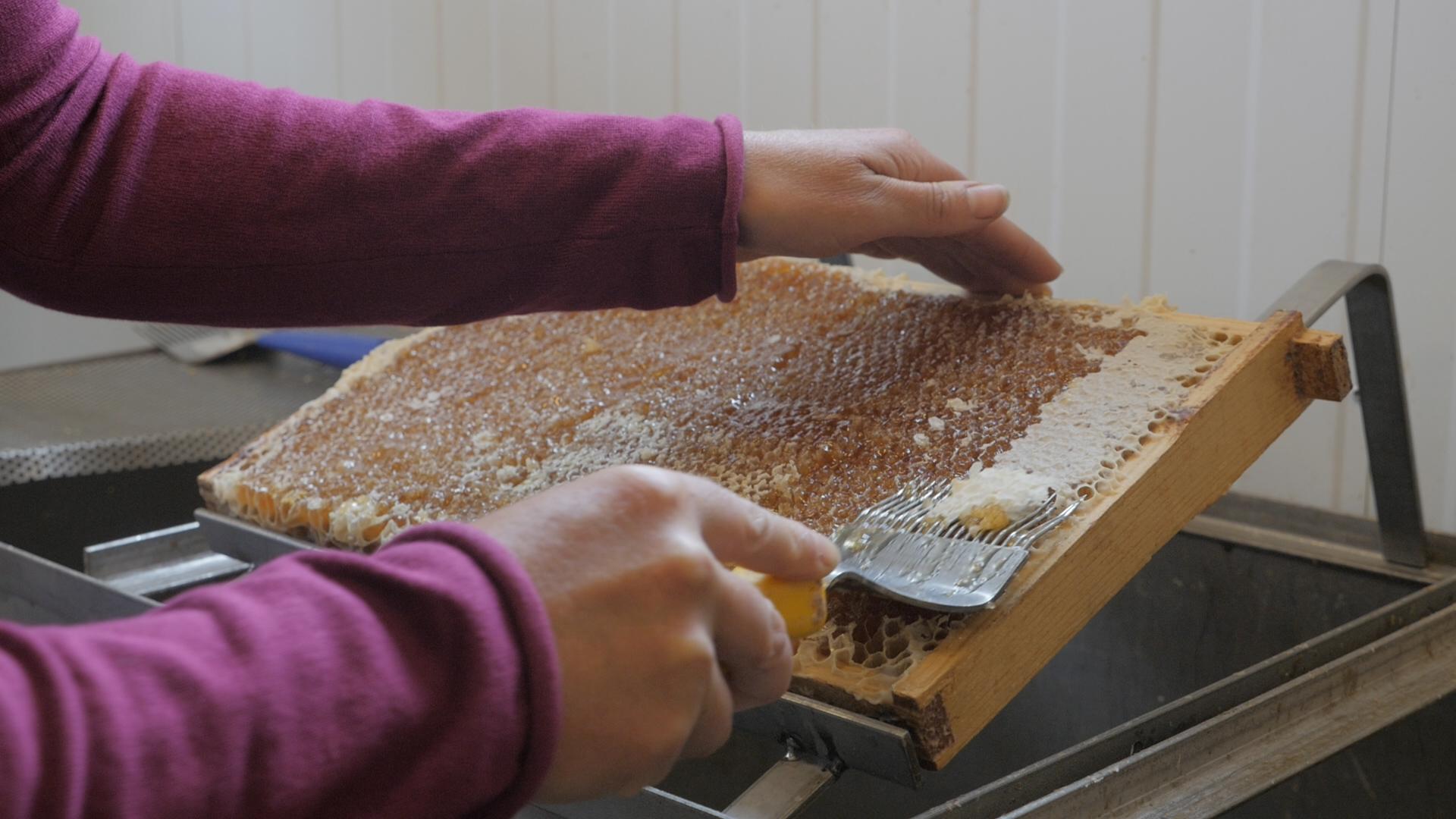 Nyskördad honung